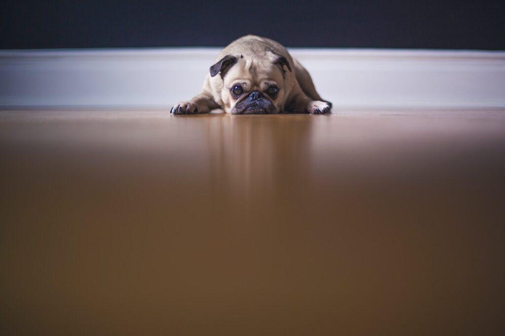 Kosten gietvloer op bestaande houten vloer berekenen - verbouwingsprijzen 2File